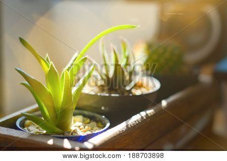 Small Cactus in wood box with sun light and soft blur background