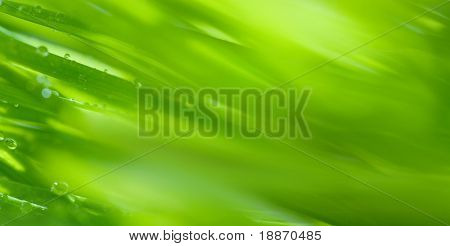 Background. A grass with dew drops