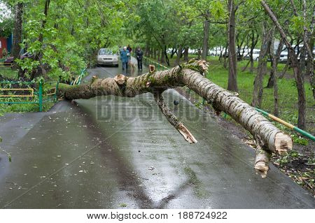 MOSCOW - MAY 29: A tree broken by a hurricane on Konenkova Street on May 29 2017 in Moscow. 11 people died during this hurricane.