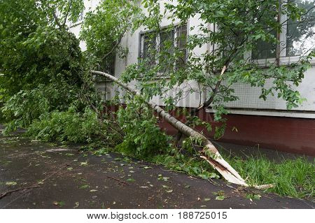 MOSCOW - MAY 29: Tree broken by hurricane and house on Konenkova Street on May 29 2017 in Moscow. 11 people died during this hurricane.