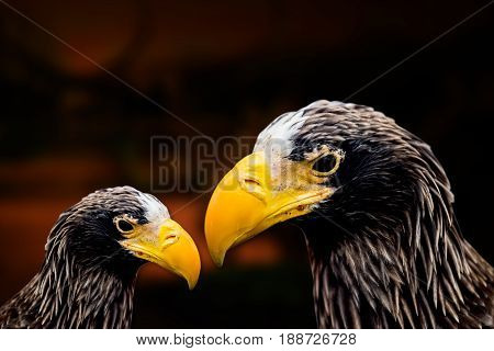 hawk and eagle, hunter bird in the forest