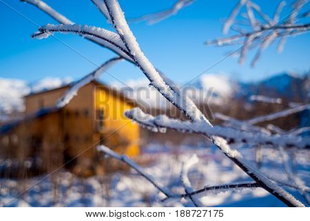 Blurred yelow guest house behind snowed branches