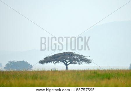 The savannah in the Tarangire National Park in Tanzania