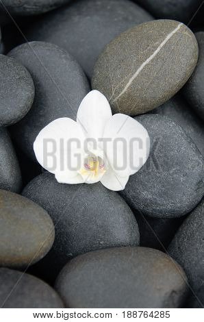 Pile of stones with white orchid