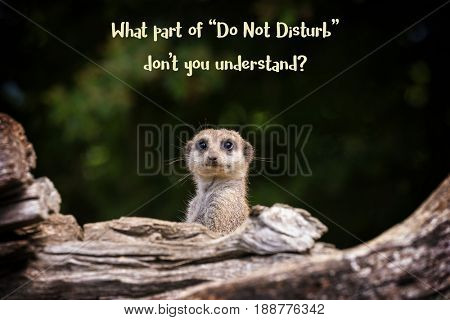 Funny meerkat meme with text -  What part of