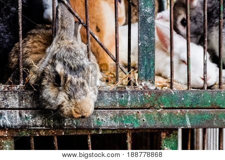 Caged rabbits ready to slaughter in Cairo - Egypt