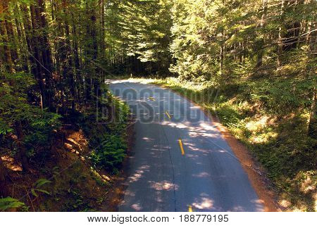 Overhead view of a road in Redwood National Park