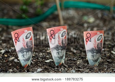 Three Australian $20 dollars planted in garden bed