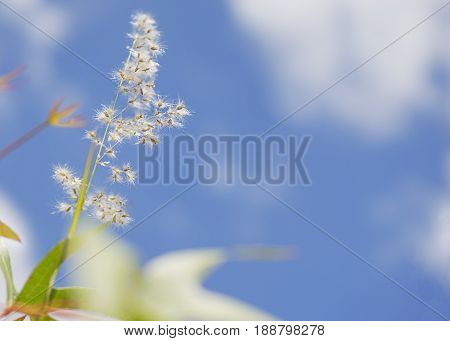 Fluffy seed head of grass against cloudy blue sky background concept for growth life and seasons