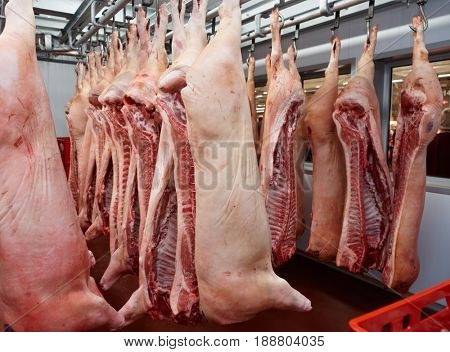 Pig carcasses cut in half stored in refrigerator room of food processing plant