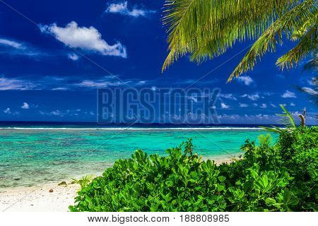 Beach on a tropical island during sunny day framed by palm trees, Rarotonga, Cook Islands