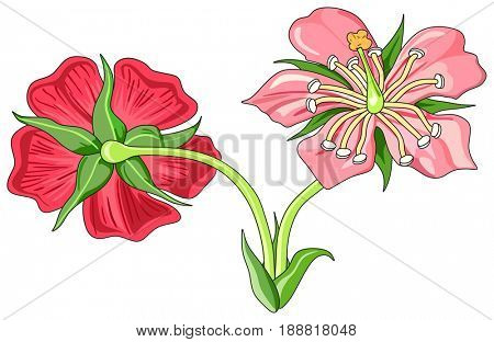 Flower Parts Diagram front and back view with all parts unlabeled useful for school education and botany biology science
