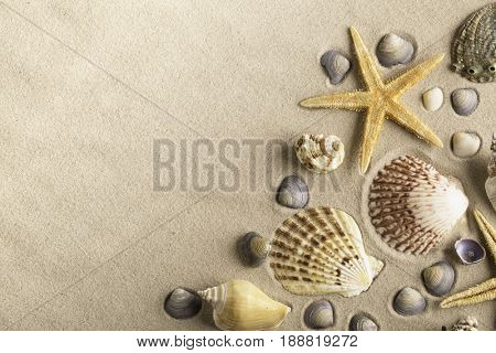 sea star clamms and other shellfish on sand beach forming a frame