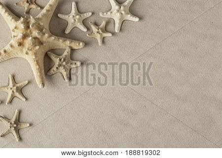 seastar or star fish on beach sand background