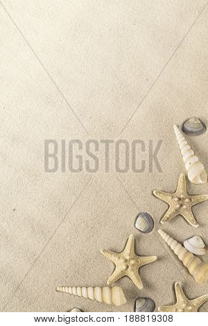 shellfish on sand, a collection of starfish and sea shells on a sandy summer beach.