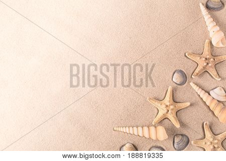 seashells and starfish on a sand background with copy space. Seastar shellfish on sandy beach.
