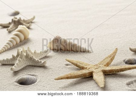 summer vacation beach with sea shells and star fish