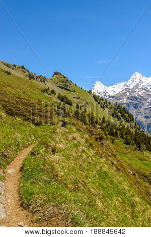 View of beautiful landscape trail in the Alps with fresh green meadows and snow-capped mountain tops in the background on a sunny day with blue sky and clouds in springtime.