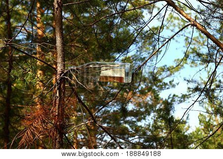 Russia Siberia. The glass bottle on a brunch of a pine in a forest.