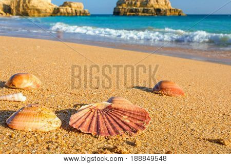 seashells on the sand on the beach in Algarve region Portugal. close up