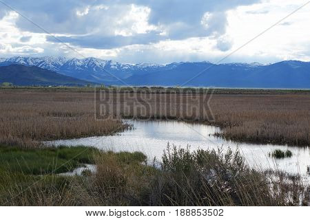 Chilly Slough provides nice habitat for wildlife near Mackay, Idaho in the Lost River Valley.