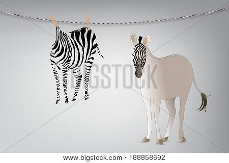 Vacation Concept : Zebra with zebra skin hanging on clothes line background.