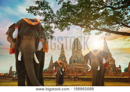 Ayuthaya, Thailand - December 20 2016: Wat Chaiwatthanaram Temple In Ayuthaya Historical Park, A Une