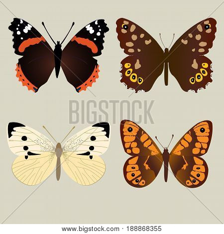 Four different beautifully butterflies; Amiral butterfly; Speckled Wood butterfly ; White butterfly; Wall brown butterfly