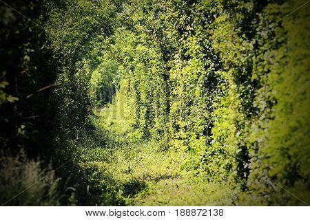 tunnel of love near caransebes a place where the railroad enters a forest