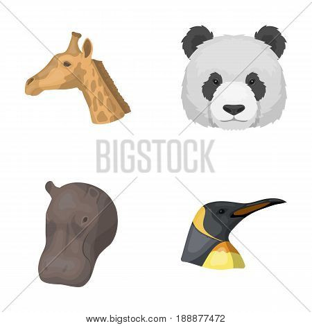 Panda, giraffe, hippopotamus, penguin, Realistic animals set collection icons in cartoon style vector symbol stock illustration .