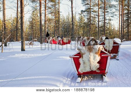 People On Reindeer Sled Caravan Safari In Forest Finnish Lapland