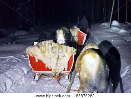 People In Reindeer Sledge At Night Safari In Lapland Finland