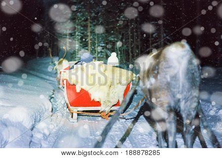People In Reindeer Sleigh At Night Safari In Lapland Finland