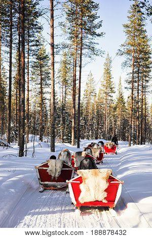 People In Reindeer Sledge Caravan Safari In Forest Finnish Lapland