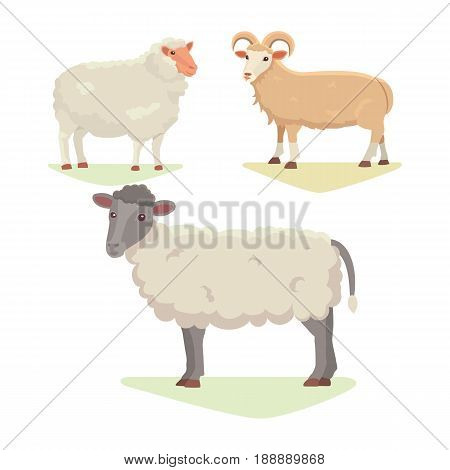 Vector set Cute Sheep and Ram isolated retro illustration. Standing Sheeps silhouette on white.
