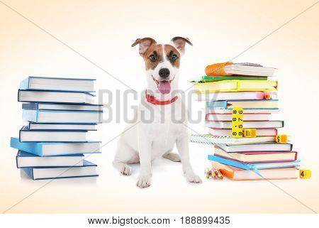 Back to school concept. Cute dog with books on color background
