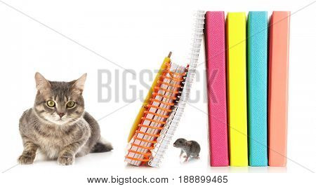 Back to school concept. Cute mouse hiding from cat among books on white background