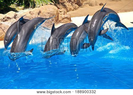dolphin family leaping out of the blue