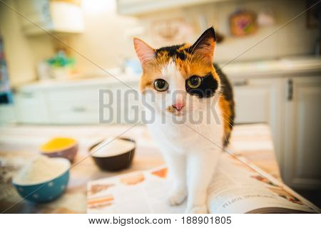Cute cat stood on the table and watched.cookbook