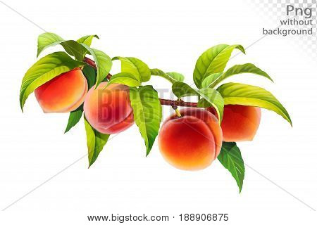 Peach on a branch with leaves, png without background