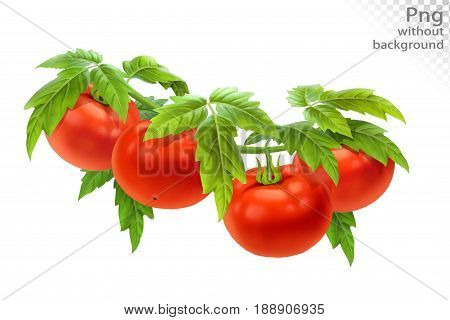 Tomato on a branch with leaves, png without background
