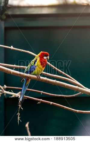 Parrots Macaws Sitting On A Close-up Branch