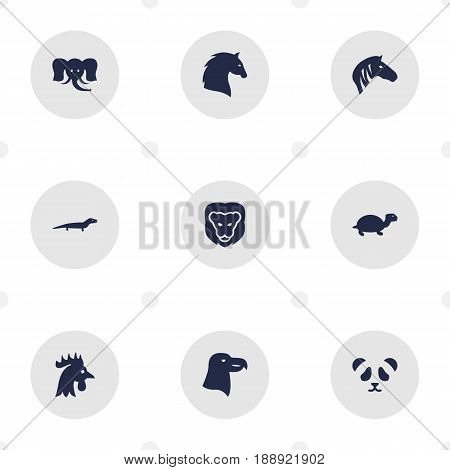 Set Of 9 Zoo Icons Set.Collection Of Rooster, Aquila, Horse And Other Elements.