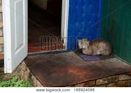 Gray cat sitting on the rug on the doorstep near the open door