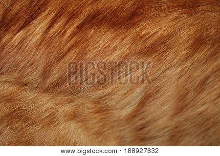 red fur , beautiful natural bright red fur, closeup