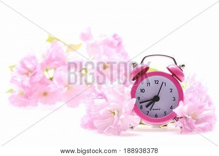 Vintage Alarm Clock In Sakura Blossom Isolated On White