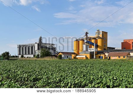 Agricultural industrial complex of silos and young sunflower farmland in springtime