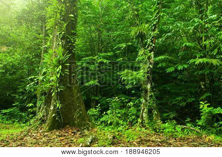 Fantastic tropical rainforest landscape in morning.