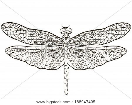 Vector coloring Dragonfly insect for adults illustration. Anti-stress coloring for adult. Zentangle style. Black and white lines. Lace pattern