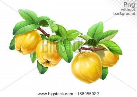 Quince on a branch with leaves, png without background